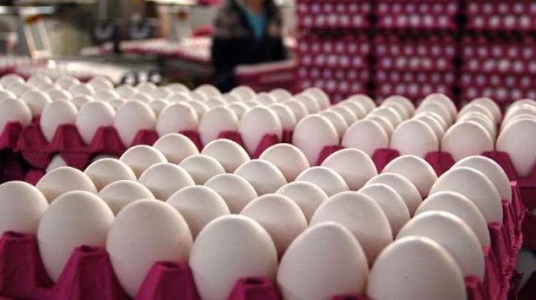 Yumurta fiyatları dibin dibinde!