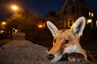 Vahşi Yaşamın En İyi Fotoğrafları