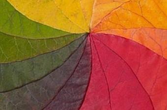 Eğer dört tip koni hücreniz varsa kimsenin göremediği ara renkleri net bir şekilde algılayabilirsiniz. Ama gördüğünüz renklerin neye benzediğini ya da dünyanın size nasıl göründüğünü bilemiyoruz. Çünkü bunu açıklamaya çalışan insanlarda aktarımların hepsi öznel oluyor.