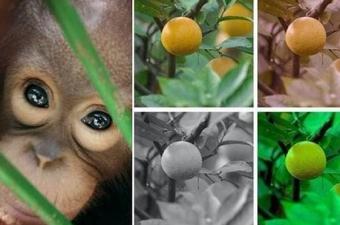 Hayvanlar da renkleri görebiliyor mu?
