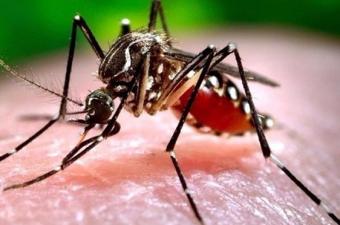 Sivrisineklerin büyük bir bölümü gün batımından sonra avlanmaya başlar. Yaz aylarında gündüz saatlerinde oluşan kuru sıcaklar onları kolayca öldürebildiği için bu durumdan korunmak adına saklanmayı tercih ediyorlar.