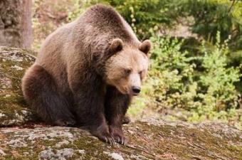Sıcak iklimde yaşayan hayvanlar da kış uykusuna yatar mı?