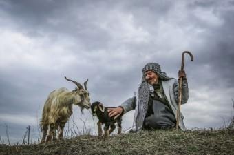 """Türkiye'de küçükbaş hayvan varlığı bakımından ilk sıralarda yer alan Van'da, """"baharın müjdecisi"""" olarak kabul edilen kuzu ve oğlak doğumları oldu. Küçükbaş hayvancılığın yoğun olarak yapıldığı ve Türkiye'nin güzel meralarına sahip Van'ın Gevaş ilçesinde, dünyaya gelen oğlaklar çiftçinin yüzünü güldürdü."""