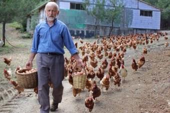 Bursa'da tekstil işinden emekli olduktan sonra organik yumurta işine giren vatandaşın baktığı tavuklar peşinden koşuyor.  Fotoğraf: Burak Türker