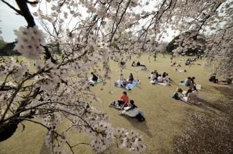 Japonlar baharın gelişini sembolize eden Japonya'daki kiraz çiçeklerinin açmasını geleneksel piknikle kutladı. Aile ve arkadaşları ile Shinjuku Park'ta bir araya gelen Japonlar ve turistler keyifli vakit geçirdi.