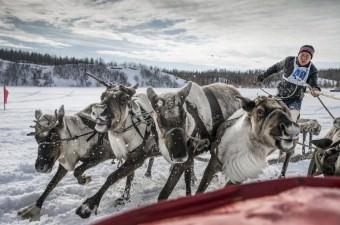 Rusya'nın kuzeyinde, Moskova'ya 2bin 500 kilometre mesafedeki Yamal-Nenets bölgesi Priuralsky ilçesine bağlı Aksarka köyünde Ren geyiği çobanları günü kutlamaları gerçekleşti. Aksarka halkı, yarışlar ve kültürel etkinliklerle kutlamalara renk kattı.