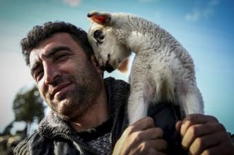 Bursa'da yetiştiriciler, yaylalara götürdükleri ve geceyi orada geçirdikleri hayvanlarını, her gün belirli saatlerde bulundukları yerleşim birimine indirerek hem yavrularını emzirmelerini sağlıyor hem de sütlerini sağıyor.