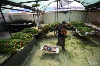 Anneler Günü öncesinde Antalya'daki çiçek seralarında çalışan kadınlar, dünya annelerine gönderilecek çiçeklerin fide ekiminden paketlenmesine kadar her aşamasında yer alıyor. Tokat'tan Antalya'ya eşi Murat Demir ile gelerek 8 yıldır çiçek seralarında çalışan Ayşe Demir, 10 aylık kızı Hira Nur'u çiçeklerin arasında büyütüyor.