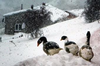 Ardahan'ın Posof ilçesinde kar kalınlığı 40 santimetreye ulaştı.  Fotoğraf: İbrahim Ataman