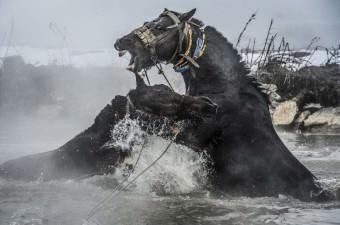 Bitlis'in Güroymak ilçesine bağlı Budaklı köyünde bulunan ve 40 derece sıcaklıktaki suyuyla özellikle yaz döneminde şifa arayan yerli ve yabancı turistleri ağırlayan Budaklı kaplıcası, kışın ise manda ve atların uğrak yeri haline geliyor. Kış mevsiminin çetin geçmesinden dolayı köyde ahırlardan çıkamadığı için kirlenen hayvanlar, sahipleri tarafından temizlenmek için belirli aralıklarla kaplıcaya götürülüyor.