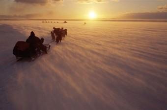 Britanyalı fotoğrafçının karelerinde tundraya yayılan 1000 ren geyiğinden oluşan sürü ve kuzey ışıkları da yer aldı.
