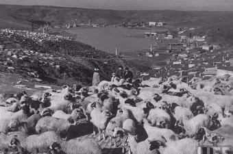 118. Halıcıoğlu / Bademlik (1940) Musevi Mezarlığı'ndan Haliç'e bakış.