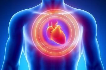 Kalp, 9 metreye kadar kan fışkırtma gücüne sahiptir.