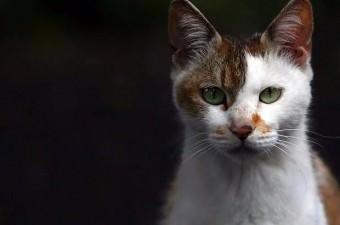 Eski Mısır'da kediler kutsal kabul edilirdi. Kedi öldüren bir kişi, ölüme mahkum edilebilirdi.