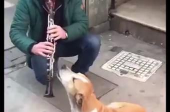 Efkarlı Köpek